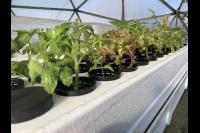 Grow Row Series