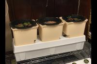 Grow Bucket System